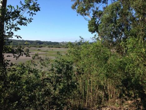 florestapateira1_1_725_999